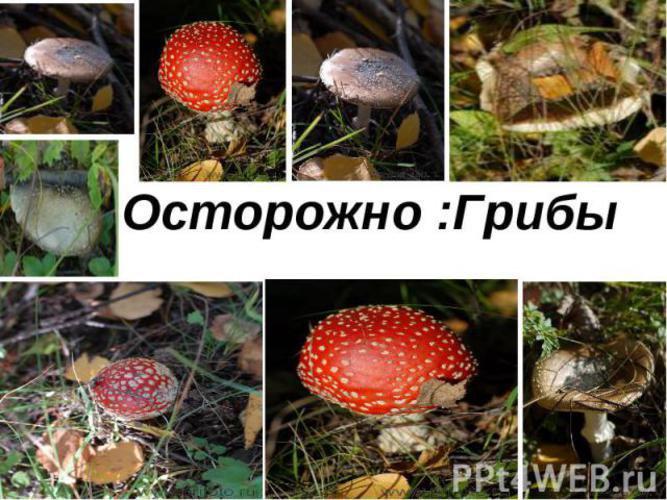грибы ядовитые картинки